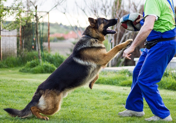 are german shepherd a good dogs