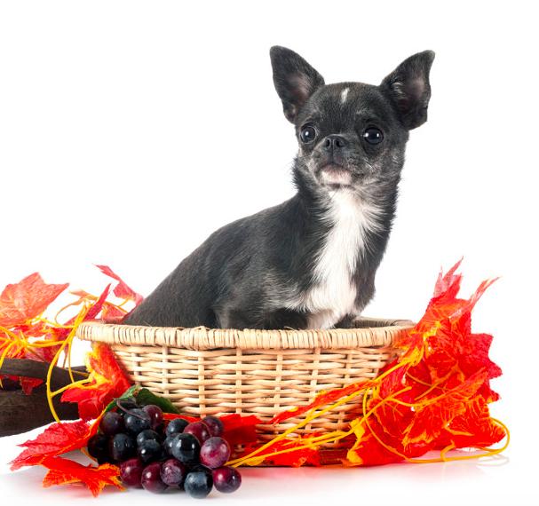What happens if my dog eats a grape