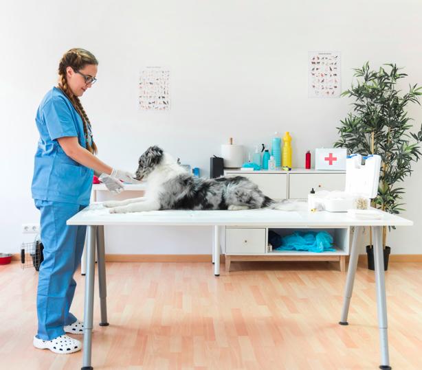 dna testing for dog