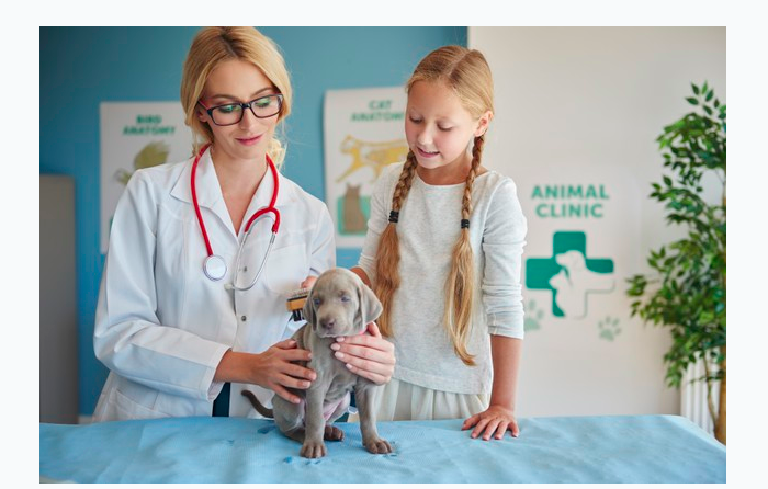 How Much Does a Dog Dna Test Cost At a Vet? 10 Things To Know