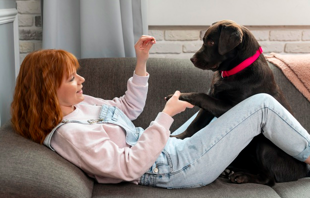 communication with your dog
