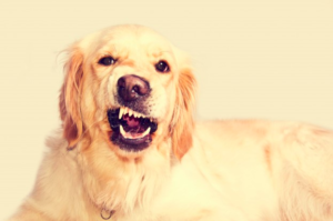 How Dogs Communicate – Can dogs understand the human language?