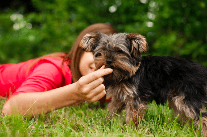 principles for Feeding adult Pets