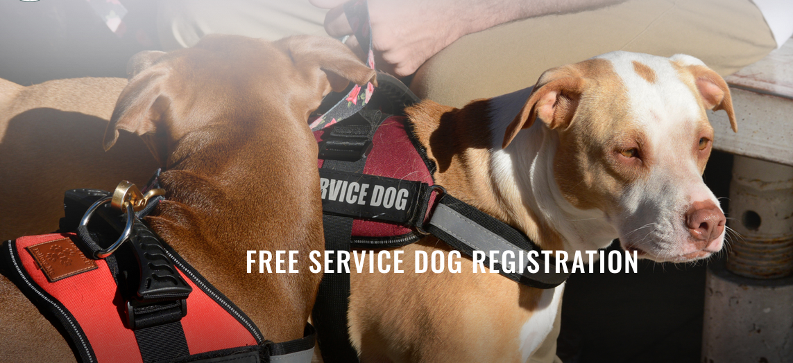 How to find a legitimate service dog registry