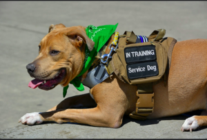 How to find a legitimate service dog registry – 10 things you need to know