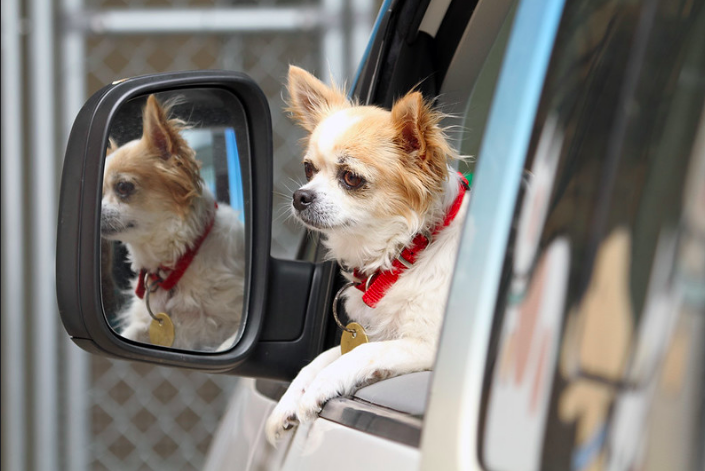 Do dogs miss their owners when they go on holiday | Dogsvets