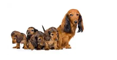 Why won't my dog feed her puppies?