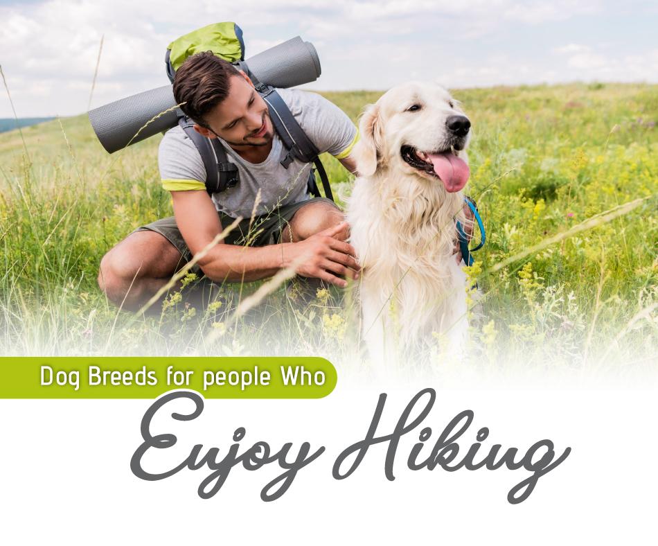 Dog breeds for people who enjoy hiking (+ off-leash hiking)