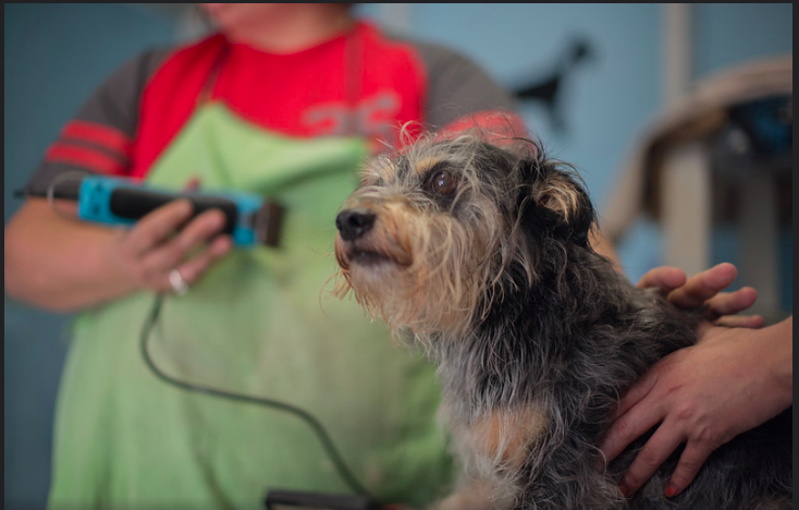 why are my dog clippers not cutting (Solved) - 5 Things to know