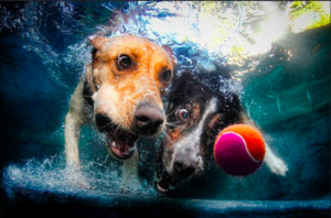 Can Dogs Hold Their Breath Underwater – 7 Facts You Need to know