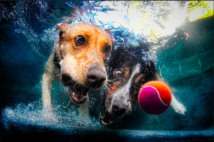 Могут ли собаки задерживать дыхание под водой – 7 Факты, которые вам нужно знать