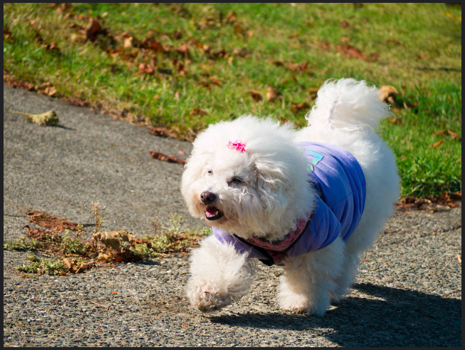 Can dogs wear baby clothes - How to Make Dog Clothes (DIY Tips Video)