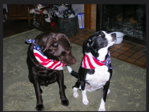 Fireworks:  4 Tips To Keep Your Pet Safe and Sound