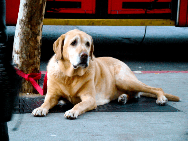 Do Dogs Suffer Depression? How To Help Your Sad Dog