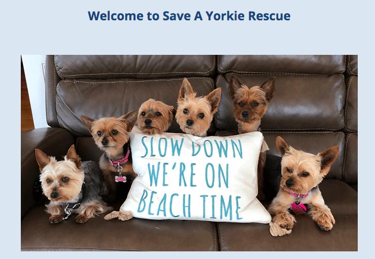 Dog Shelter for Yоrkie