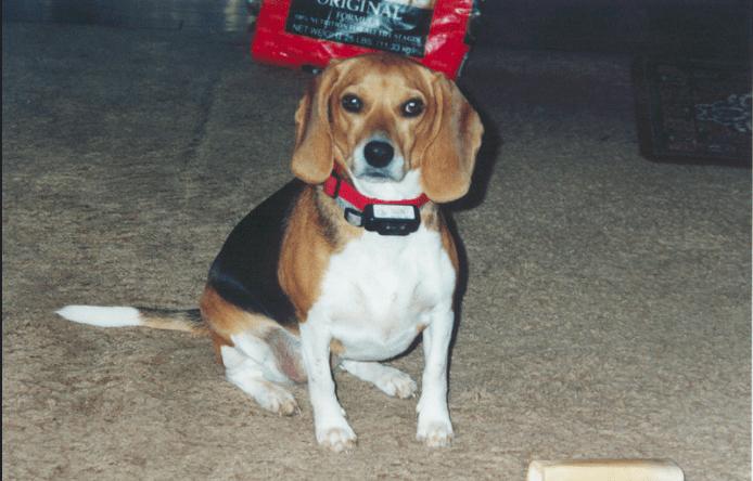 best dogs shock collar