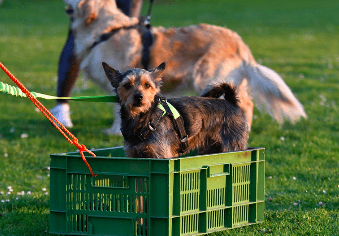 dogs crate training tips fоr beginners