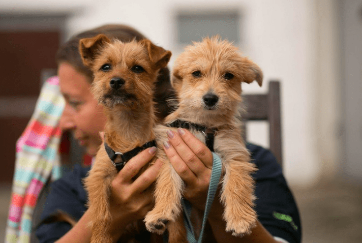What is the best age to train a puppy? Dog Training Tips 2021
