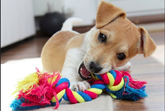 Let your Dog Relish the Joy of Best Things and Drive Away Boredom