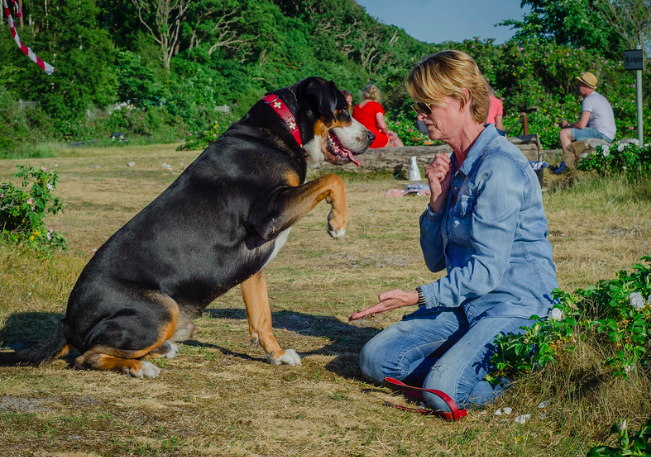 How to Address Dog Aggression Safely and Effectively