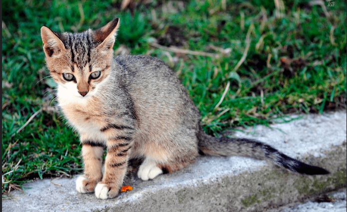 How to Make Your Cat Feel at Home Wherever You are Away - (Explained)