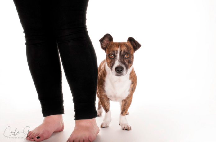Why are dogs scared of vacuum cleaners? 7 Household items dogs are afraid of