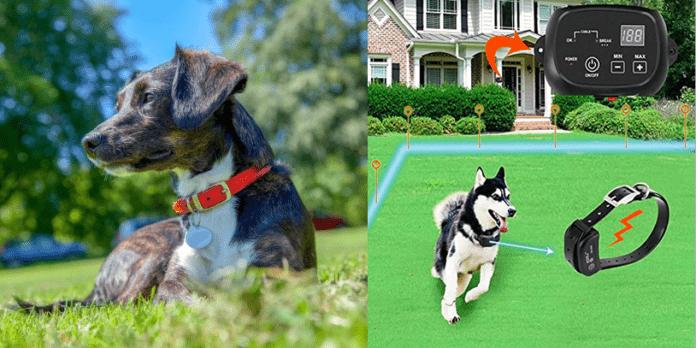 Top 3: Best Wireless Dog Fences in the Market 2021 (+ Shocking Revelation)