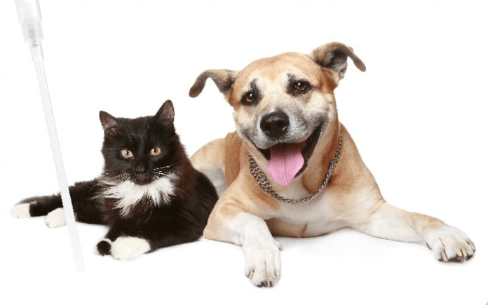 7 Reasons To Use CBD For Pets in Relation to Health Improvement