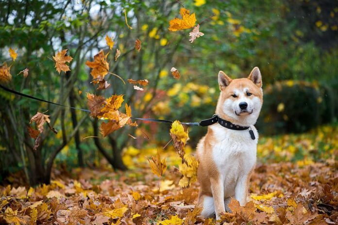 Everything Dog Owners Need to Know for the Autumn Months