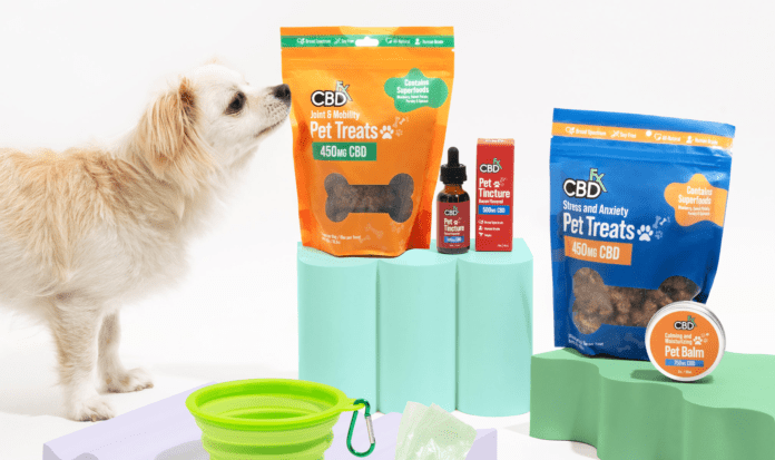 Is there safety in using CBD for pets? All that you need to know
