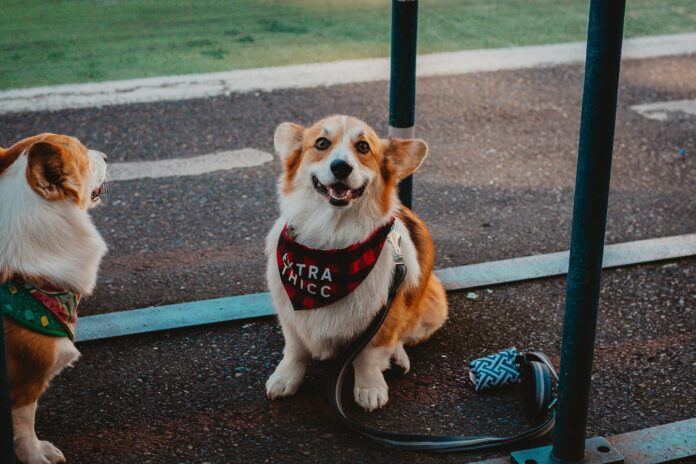 THE 9 BEST DOG COLLARS IN THE MARKET IN 2021 ( Shocking Revelation )