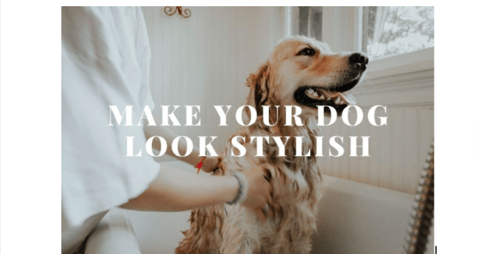 Products To Make Your Dog Look Smart | Best Grooming Items