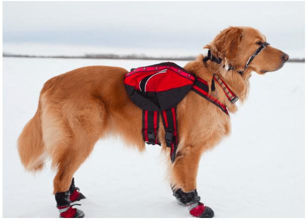 dog Waterproof Boots